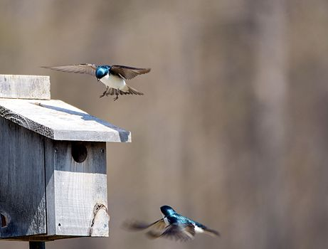 Birds flying near a rustic wooden birdhouse